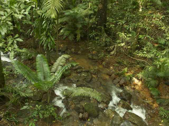 Rain forest in Daintree National Park, Queensland Photo by Nurul Rahman 2012